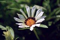 Blume Fototapeten